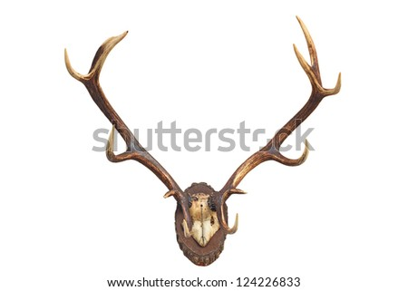 Deer's antler - stock photo