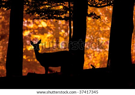 Deer silhouette in sunset - stock photo