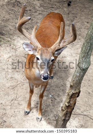 Deer standing in woods - stock photo