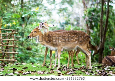 Deer standing near tree - stock photo