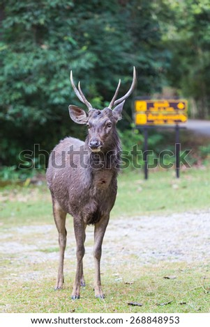 Deer standing on the grass. - stock photo
