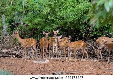 deers - stock photo
