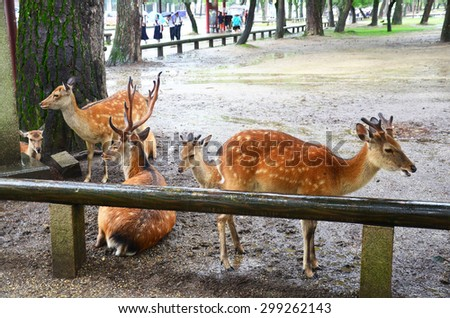 """Deers at Kofukuji Temple in Nara is the capital city of Nara Prefecture located in the Kansai region of Japan. collectively form """"Historic Monuments of Ancient Nara"""", a UNESCO World Heritage Site. - stock photo"""