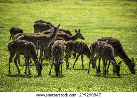 Deers eating. - stock photo