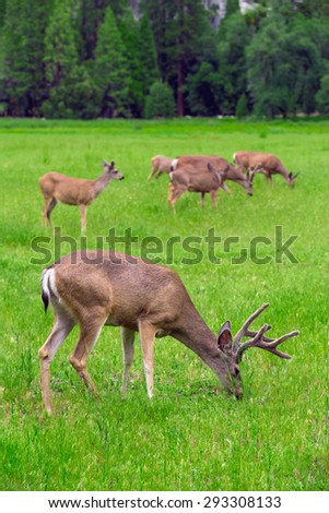 Deers on the green meadow. - stock photo