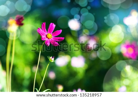 Defocus green natural background with  beautiful purple flower outdoor - stock photo