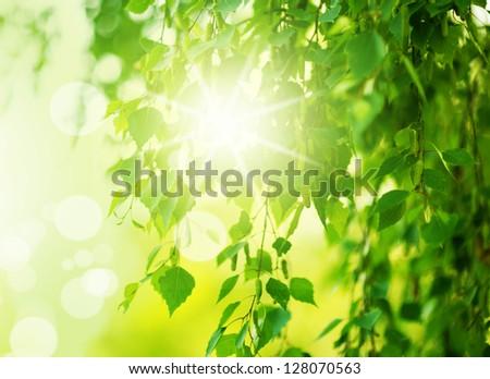 Defocus photo of birch.fresh new green leaves glowing in sunlight. Defocus - stock photo