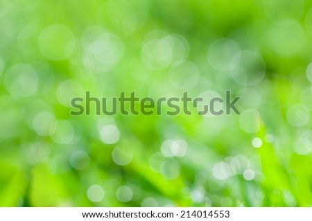 defocused abstract fresh green grass in the morning natural background - stock photo