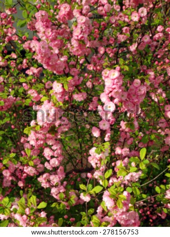 Defocused and blur image of bush completely strewn with pink flowers - stock photo