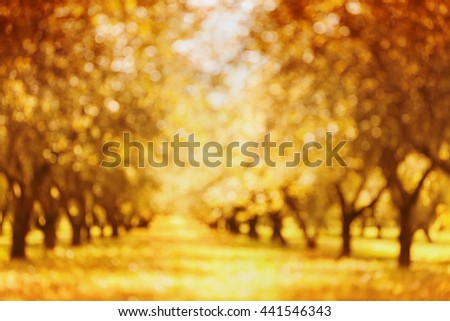 Defocused autumn park or garden for bokeh background. Blurred alley trunk of trees. Autumnal parkland. - stock photo