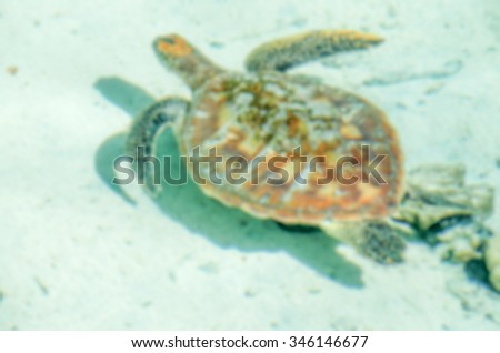 Defocused background of Sea Turtle floating in tropical lagoon. Intentionally blurred post production for bokeh effect - stock photo