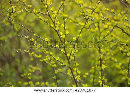 Defocused blurred plants background - stock photo