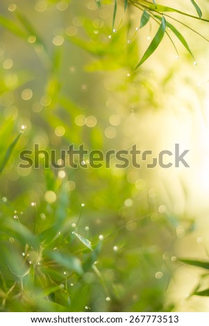 Defocused Bokeh, twinkling lights green and yellow blurred bokeh abstract light spring forest background. Natural bokeh from bamboo leaf. Blur picture style. - stock photo