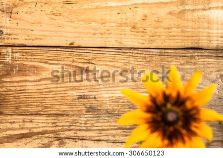 Defocused flower of rudbekia on wood background, shallow depth of field useful as greeting card or birthday card. - stock photo