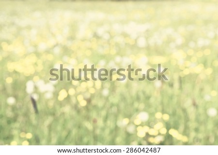 Defocused Summer Meadow in Sunlight - Perfect as a spring or summer background.  - stock photo