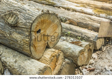 deforestation - stock photo