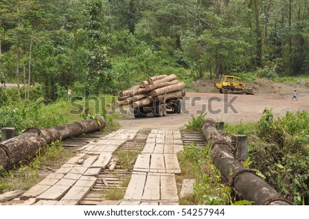 deforestation Borneo Clearance of the forest - stock photo