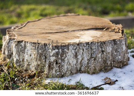 Deforestation concept with a tree stump in a green forest.  - stock photo