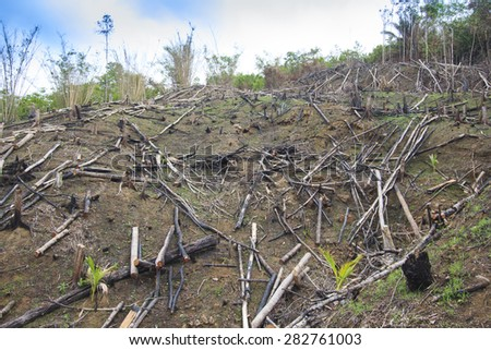 Deforestation environmental damage - stock photo