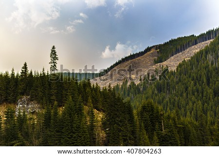 Deforestation in Romania, in an abusive way, cutting down whole forests irresponsibly - stock photo