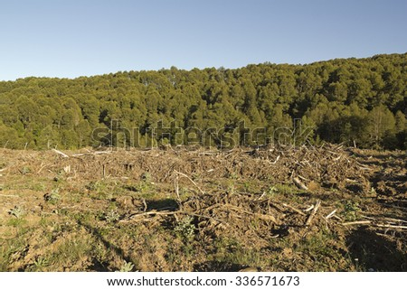 Deforestation in the Chilean Andes. Timber industry is the most important in the country. - stock photo