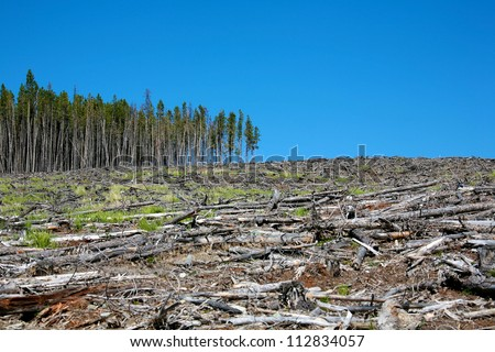 Deforestation in the mountains of British Columbia Canada - stock photo