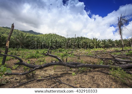 Deforestation. Rainforest destroyed and oil palm trees planted. - stock photo