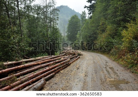 Deforested area in a forest with cutted trees - stock photo