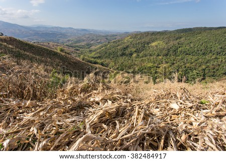 Deforesting for filed corn  in North-east of Thailand - stock photo