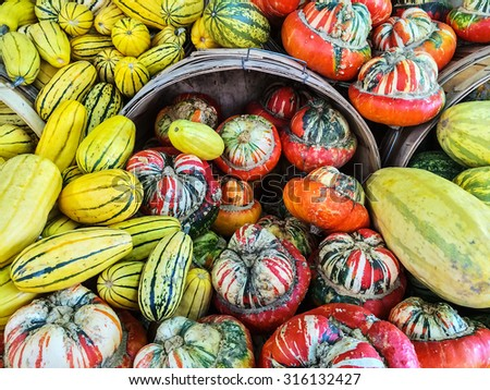 Delicata and Turban squashes at the market. Autumn vegetables. - stock photo