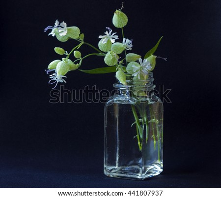delicate flowers in a glass vase on a black background - stock photo