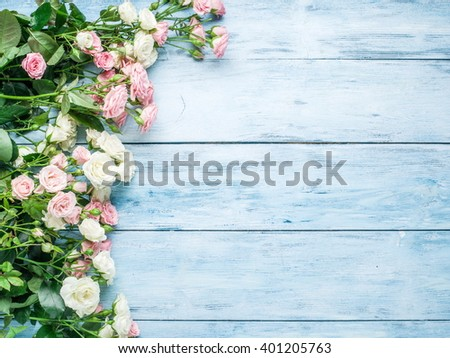 Delicate fresh roses on the blue wooden background.  - stock photo