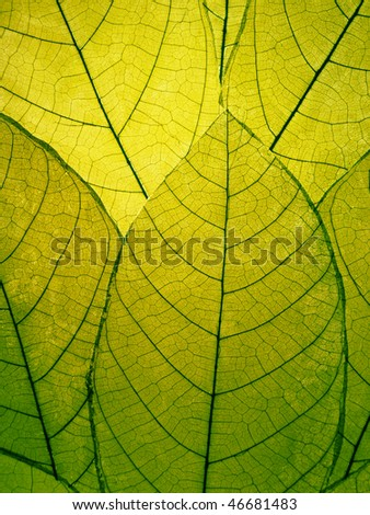 Delicate green leaves detail - stock photo