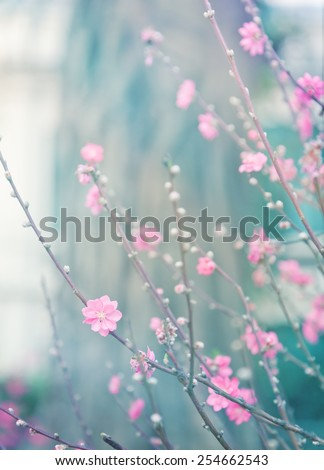 delicate pink flowers on a tree, color toning - stock photo