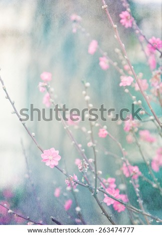 delicate pink flowers on a tree.  Image with the old grange paper texture, retro background. - stock photo