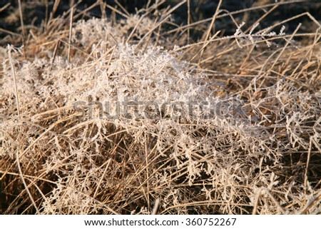 Delicate sprigs of grass with ice crystals shimmering in the sun. Winter background - stock photo
