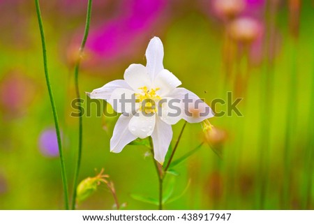 delicate white meadow flower, close-up shot, spring - stock photo