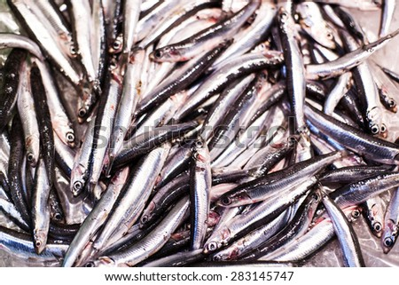 Delicious  Fresh fish on ice on the market. Smelt  fish on white iced background - healthy food, diet or cooking concept - stock photo
