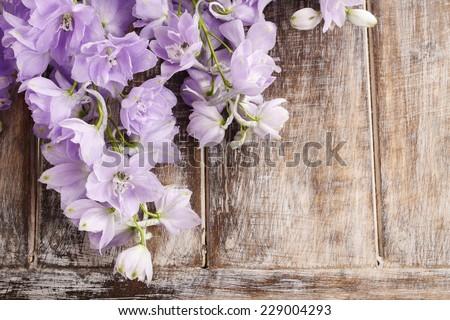 Delphinium flowers - stock photo