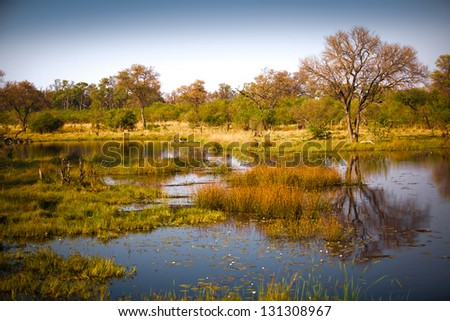 Delta landscape in Botswana - stock photo