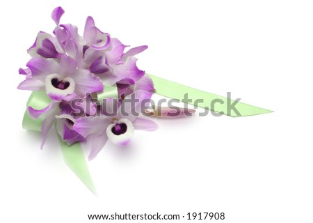 Dendrobium Orchid blooms with green ribbon, isolated on white - stock photo