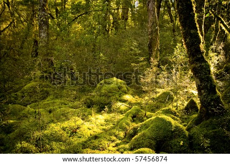 Dense and ancient forest on Milford Track, New Zealand - stock photo