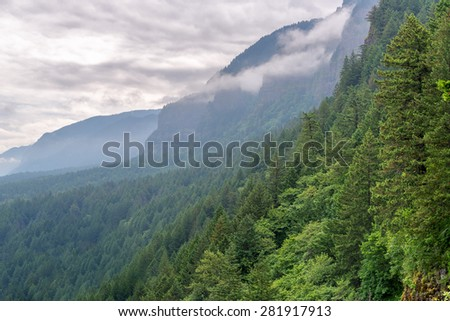 Dense green forest climbing the slopes of the Columbia River Gorge in Oregon - stock photo