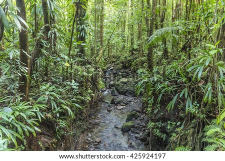 dense jungle with small creek in the national park in Dominica - stock photo