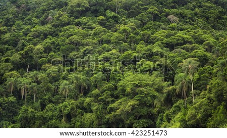 Dense tropical rainforest in Brazil, nature background. - stock photo