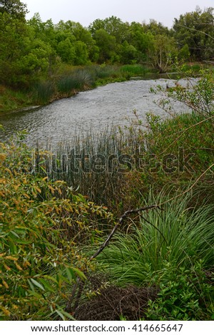 Dense vegetation flourishes along the banks of the Kern River in California's southern San Joaquin Valley. - stock photo