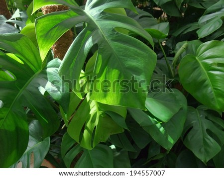 dense vegetation of foliage plants - stock photo