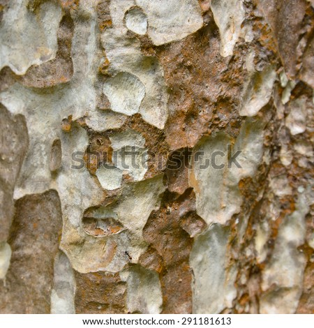 Densely covered with lichen rock, No.2. Natural texture: lichen on tree  - stock photo