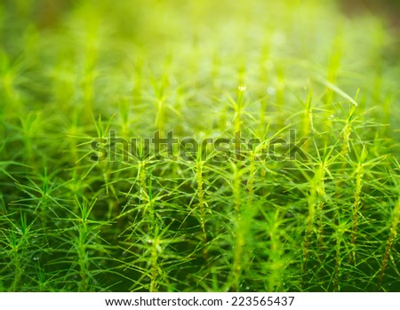 Densely overgrown moss. - stock photo