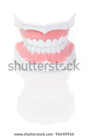 Dental Model of Teeth  on isolated background - stock photo